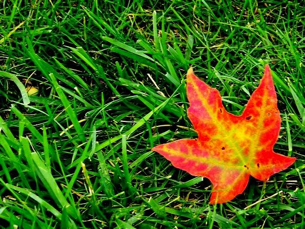 leaf 210 / 158