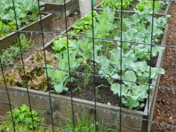 cvac garden